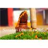 Sanatan Dharma Radio